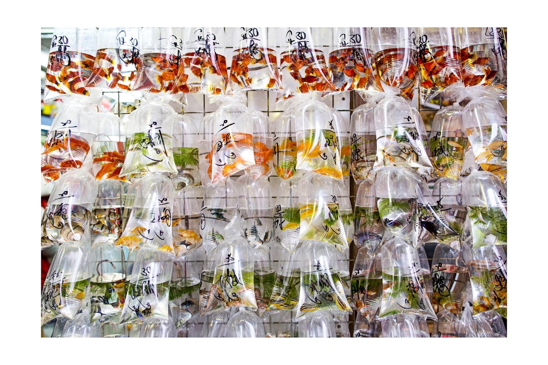 Image 1 – One of the goldfish shops on the Hong Kong Goldfish Market – Copyright Janus van den Eijnden 2