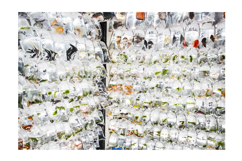 One of the goldfish shops on the Hong Kong Goldfish Market – Copyright Janus van den Eijnden (1)